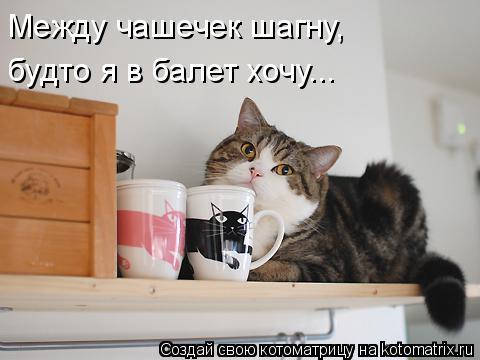 Котоматрица: Между чашечек шагну, будто я в балет хочу...