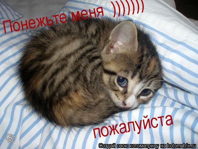 Котоматрица: Понежьте меня  ))))))) пожалуйста