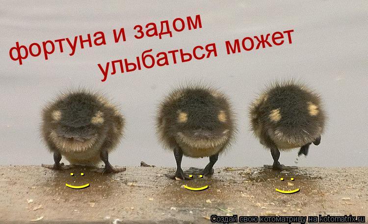 Котоматрица: фортуна и задом улыбаться может : ) : ) : )