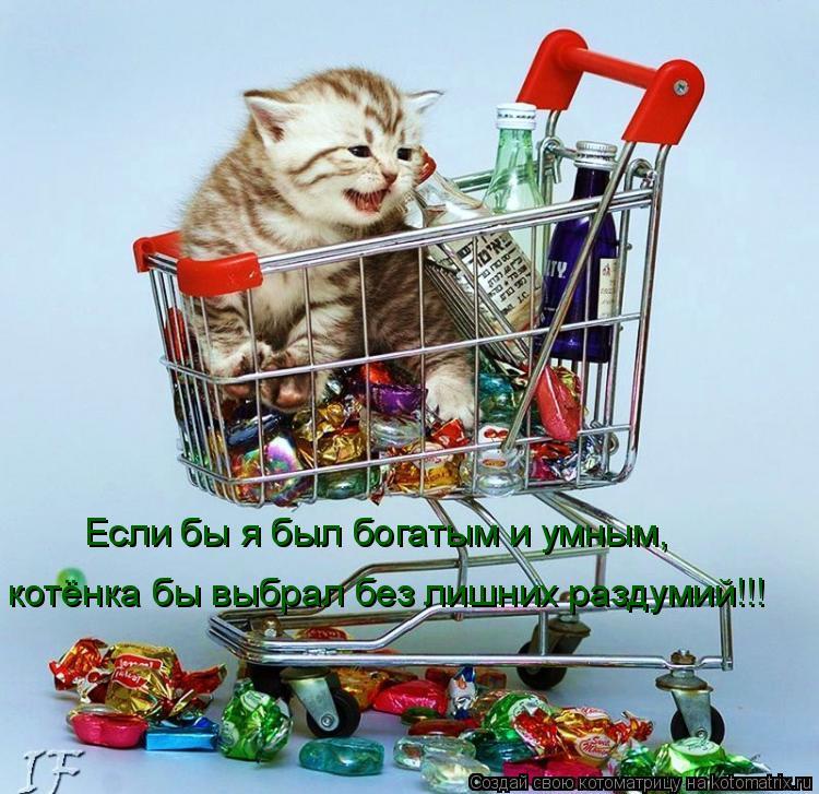 Котоматрица: Если бы я был богатым и умным, котёнка бы выбрал без лишних раздумий!!!