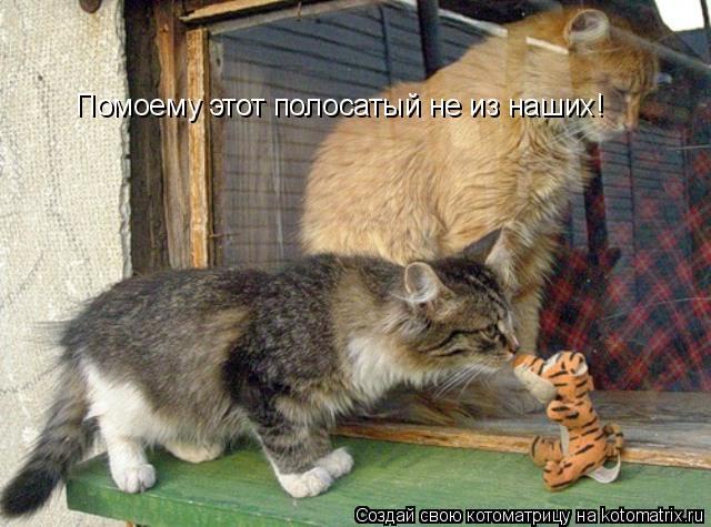 Котоматрица: Помоему этот полосатый не из наших!