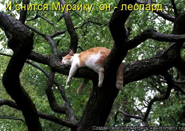 Котоматрица: И снится Мурзику: он - леопард....
