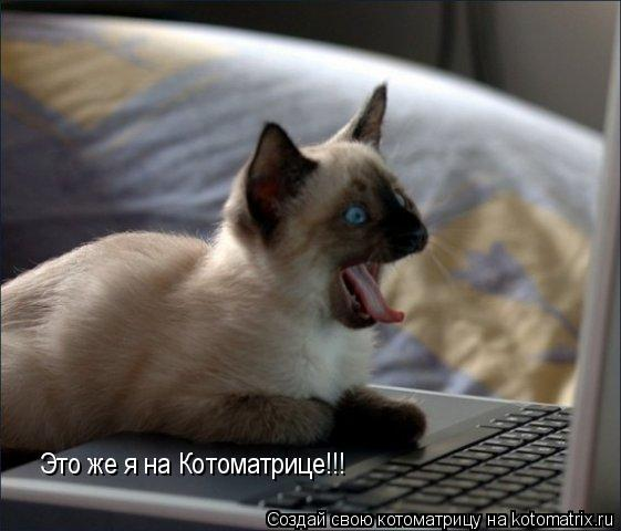 Котоматрица: Это же я на Котоматрице!!!