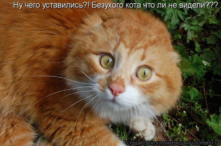 Котоматрица: Ну чего уставились?! Безухого кота что ли не видели???