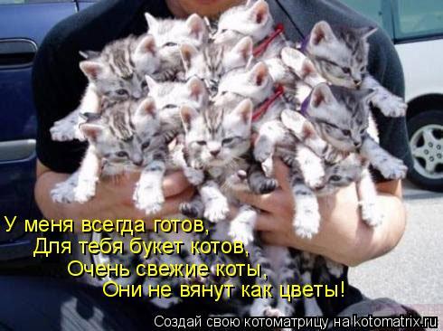 Котоматрица: У меня всегда готов,  Для тебя букет котов,  Очень свежие коты,  Они не вянут как цветы!