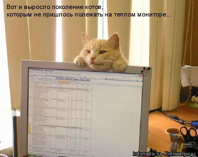 Котоматрица: Вот и выросло поколение котов,  которым не пришлось полежать на теплом мониторе...