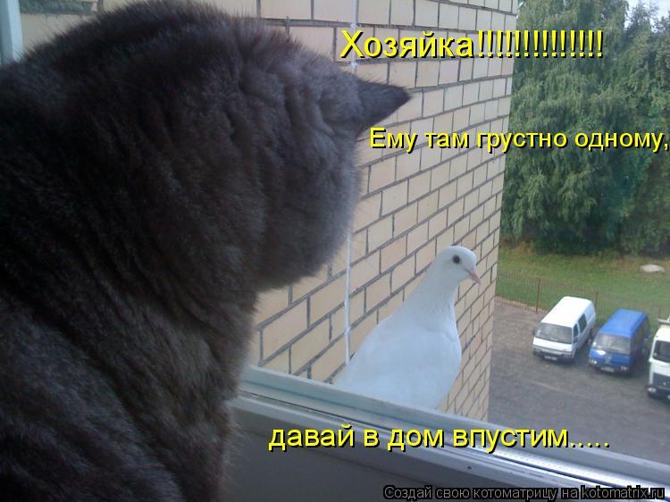 Котоматрица: Хозяйка!!!!!!!!!!!!!! Ему там грустно одному,  давай в дом впустим.....