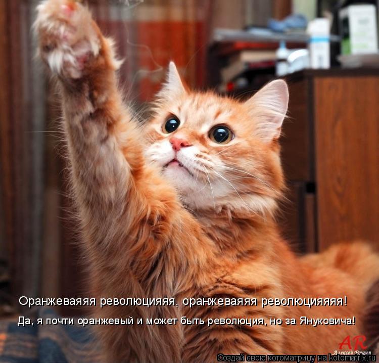 Котоматрица: Оранжеваяяя революцияяя, оранжеваяяя революцияяяя! Да, я почти оранжевый и может быть революция, но за Януковича!