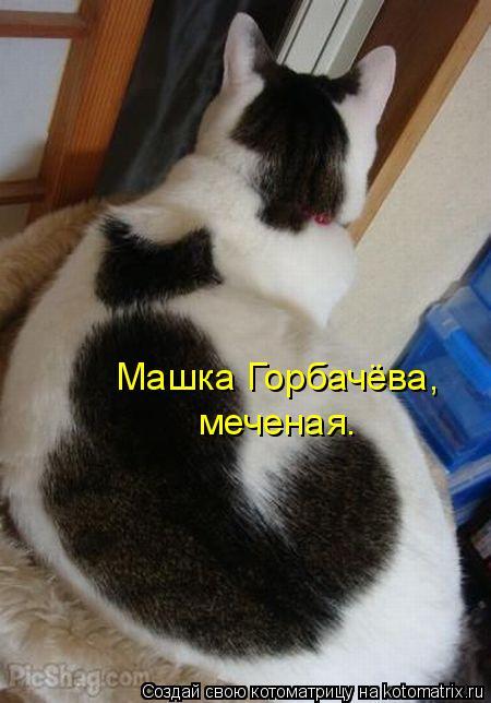 Котоматрица: Машка Горбачёва, меченая.