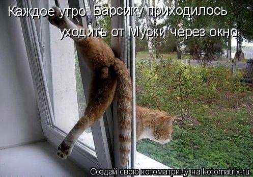 Котоматрица: Каждое утро Барсику приходилось уходить от Мурки через окно