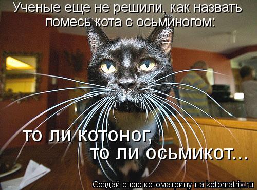 Котоматрица: Ученые еще не решили, как назвать помесь кота с осьминогом: то ли котоног, то ли осьмикот...