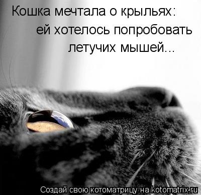 Котоматрица: Кошка мечтала о крыльях: ей хотелось попробовать летучих мышей...