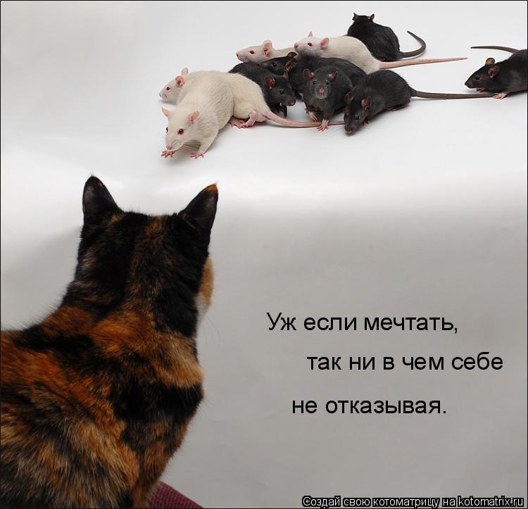Котоматрица: Уж если мечтать,  так ни в чем себе не отказывая.