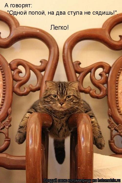 """Котоматрица: А говорят:  """"Одной попой, на два стула не сядишь!"""".  Легко!"""