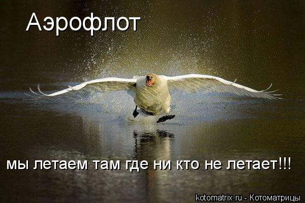 Котоматрица: Аэрофлот мы летаем там где ни кто не летает!!!