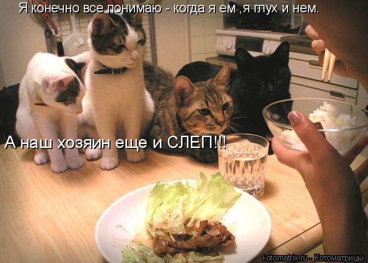 Котоматрица: Я конечно все понимаю - когда я ем ,я глух и нем. А наш хозяин еще и СЛЕП!!!