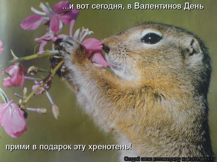 Котоматрица: ...и вот сегодня, в Валентинов День прими в подарок эту хренотень!