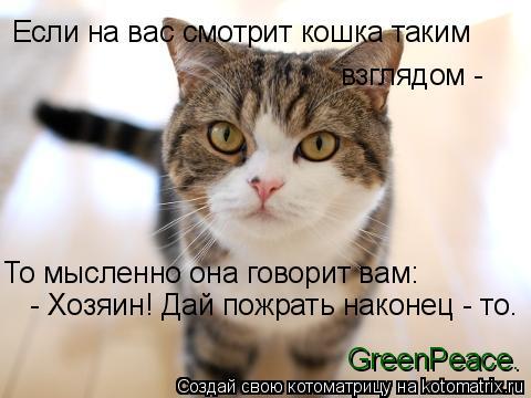 Котоматрица: Если на вас смотрит кошка таким взглядом -  То мысленно она говорит вам:  - Хозяин! Дай пожрать наконец - то. GreenPeace.