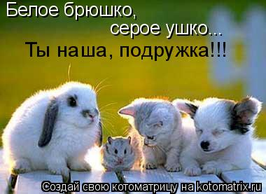 Котоматрица: Белое брюшко, серое ушко... Ты наша, подружка!!!