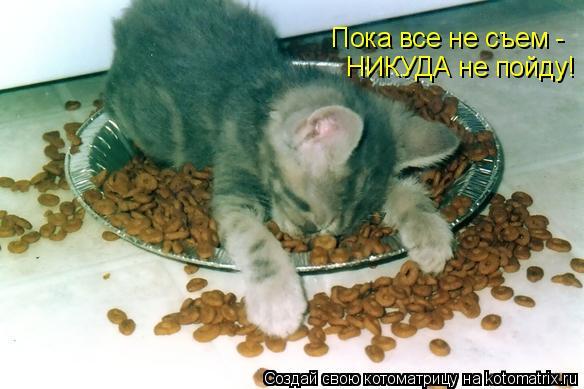 Котоматрица: Пока все не съем - НИКУДА не пойду!