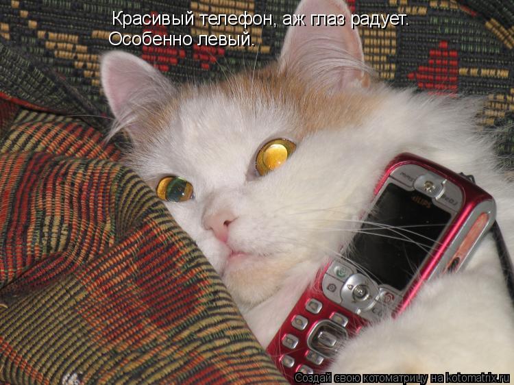 Котоматрица: Красивый телефон, аж глаз радует. Особенно левый.