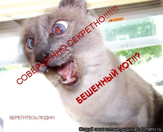 Котоматрица: СОВЕРШЕННО СЕКРЕТНО!!!!!!! БЕШЕННЫЙ КОТ!!? БЕШЕННЫЙ КОТ!!? БЕРЕГИТЕСЬ,ЛЮДИ!!!