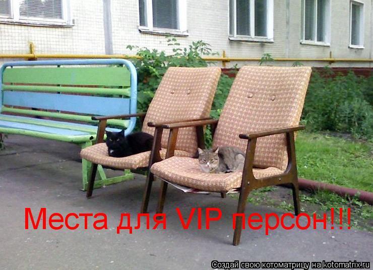 Котоматрица: Места для VIP персон!!!