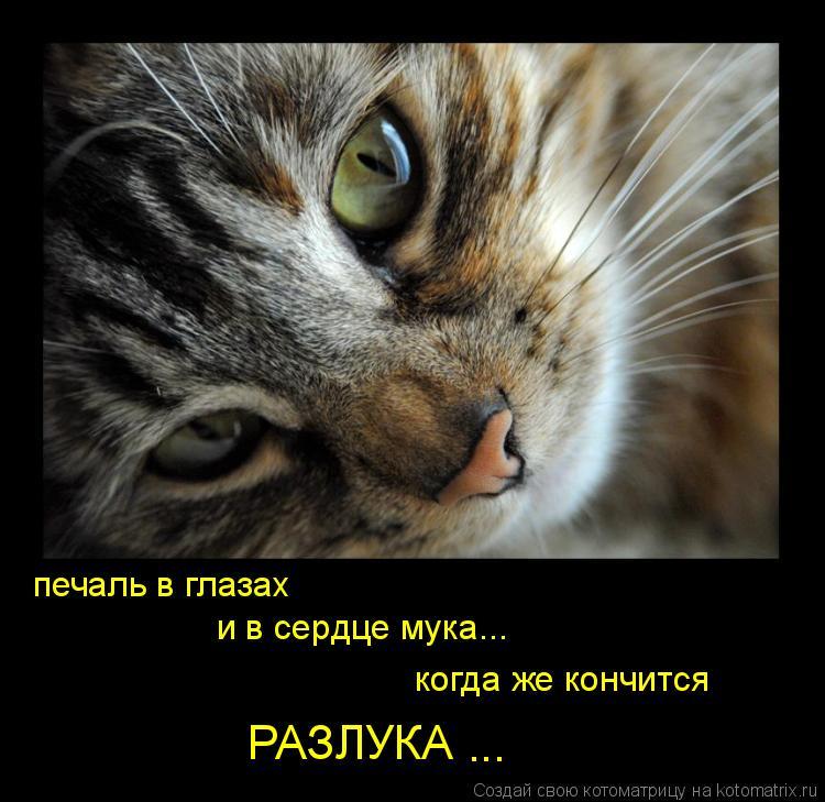 Котоматрица: печаль в глазах  и в сердце мука... когда же кончится РАЗЛУКА ...