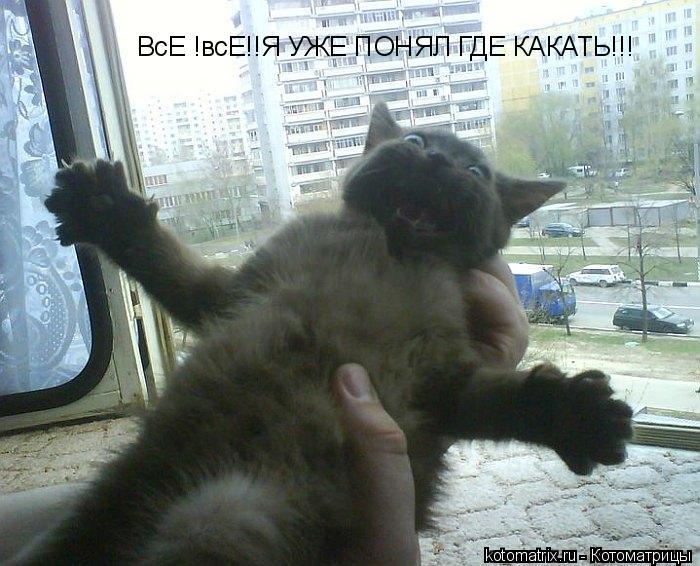 Котоматрица: ВсЕ !всЕ!!Я УЖЕ ПОНЯЛ ГДЕ КАКАТЬ!!!