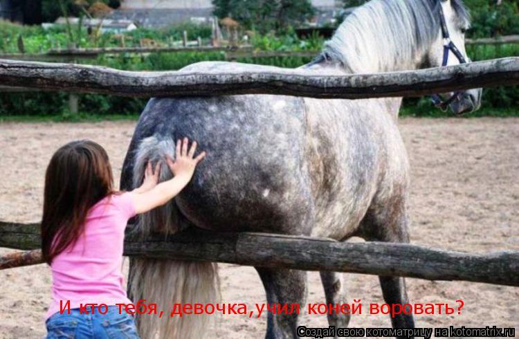 Котоматрица: И кто тебя, девочка,учил коней воровать?
