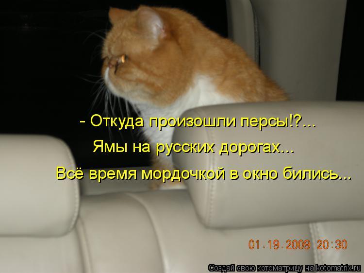 Котоматрица: - Откуда произошли персы!?... Ямы на русских дорогах... Всё время мордочкой в окно бились...
