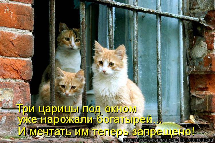 Котоматрица: Три царицы под окном  уже нарожали богатырей... И мечтать им теперь запрещено!