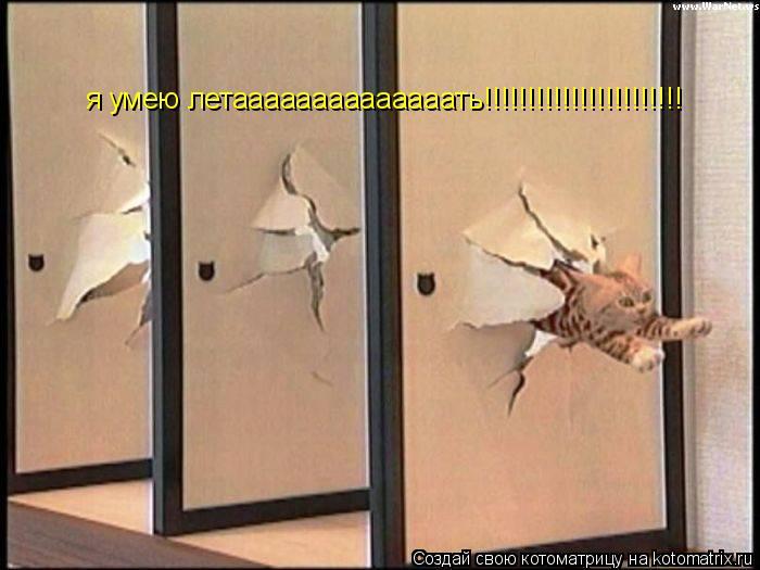 Котоматрица: я умею летаааааааааааааать!!!!!!!!!!!!!!!!!!!!!!!