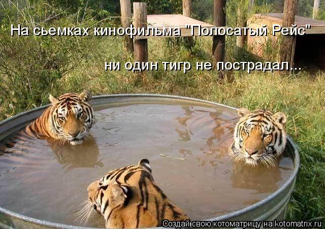 """Котоматрица: ни один тигр не пострадал... На сьемках кинофильма """"Полосатый Рейс"""""""