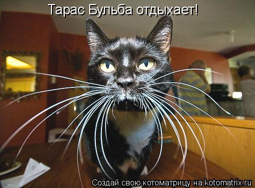 Котоматрица: Тарас Бульба отдыхает!