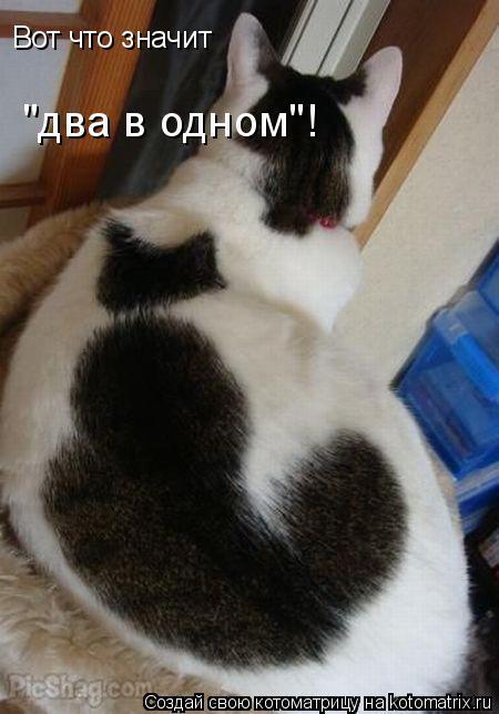 """Котоматрица: Вот что значит """"два в одном""""!"""