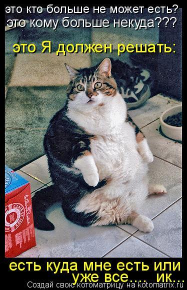 Котоматрица: это кто больше не может есть? это кому больше некуда??? это Я должен решать: есть куда мне есть или уже все....  ик...