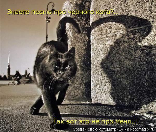 Котоматрица: Знаете песню про черного кота?.. Так вот это не про меня..!