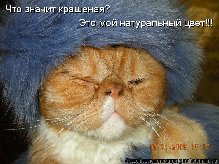 Котоматрица: Что значит крашеная? Это мой натуральный цвет!!!