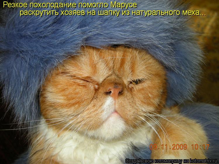 Котоматрица: Резкое похолодание помогло Марусе раскрутить хозяев на шапку из натурального меха...