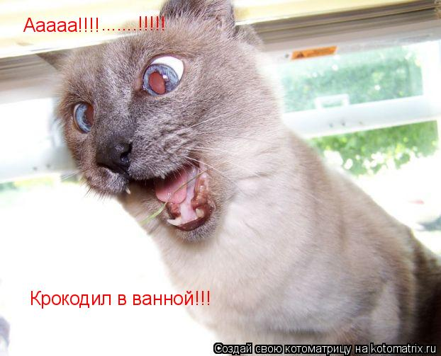 Котоматрица: Ааааа!!!! .......!!!!! Крокодил в ванной!!!