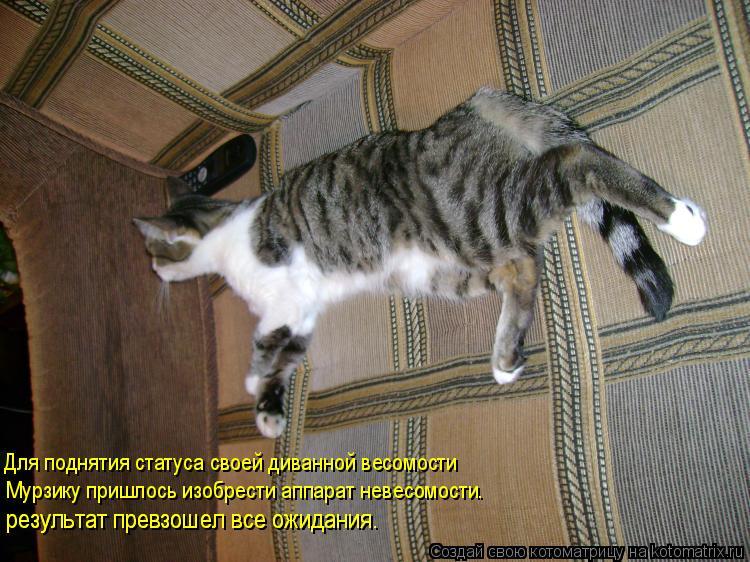 Котоматрица: Для поднятия статуса своей диванной весомости Мурзику пришлось изобрести аппарат невесомости. результат превзошел все ожидания. результа
