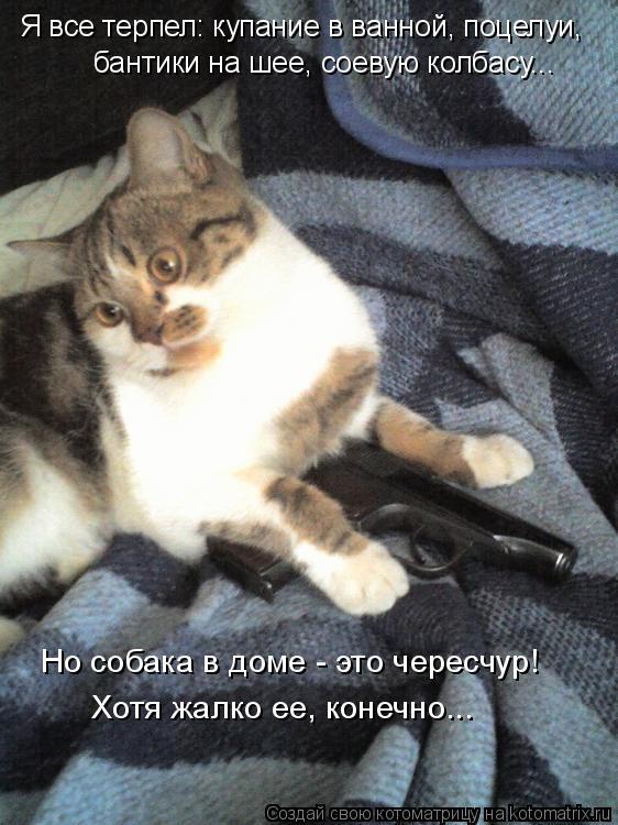 Котоматрица: Я все терпел: купание в ванной, поцелуи, бантики на шее, соевую колбасу... Но собака в доме - это чересчур! Хотя жалко ее, конечно...