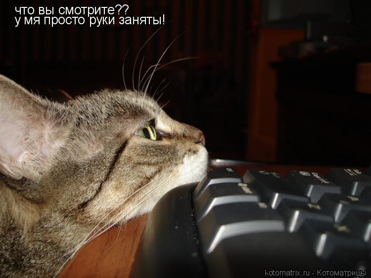 Котоматрица: что вы смотрите?? у мя просто руки заняты!