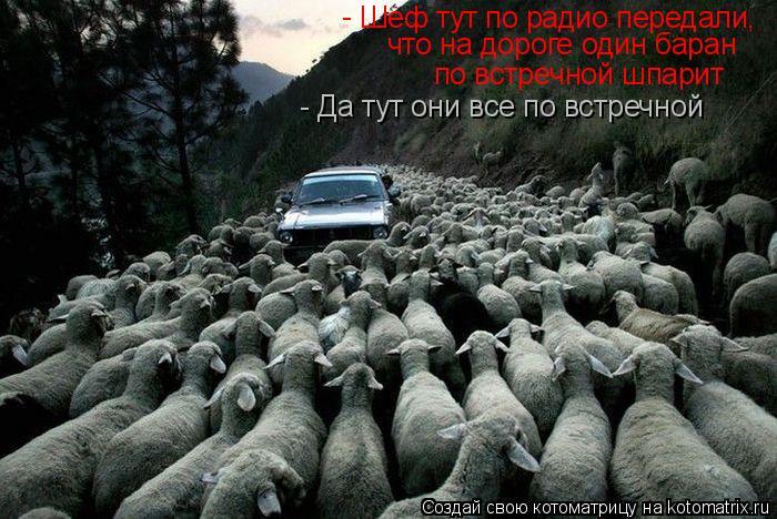 Котоматрица: Шеф тут по радио передали,  что на дороге один баран  по встречной шпарит - - Да тут они все по встречной