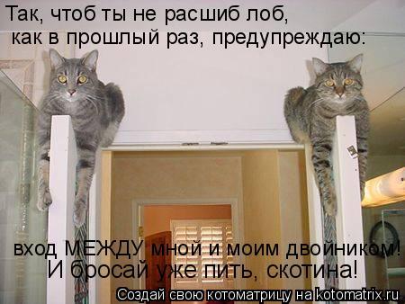 Котоматрица: Так, чтоб ты не расшиб лоб,  как в прошлый раз, предупреждаю: вход МЕЖДУ мной и моим двойником! И бросай уже пить, скотина!