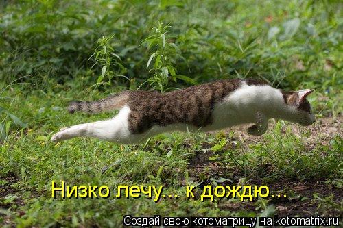 Котоматрица: Низко лечу... к дождю...