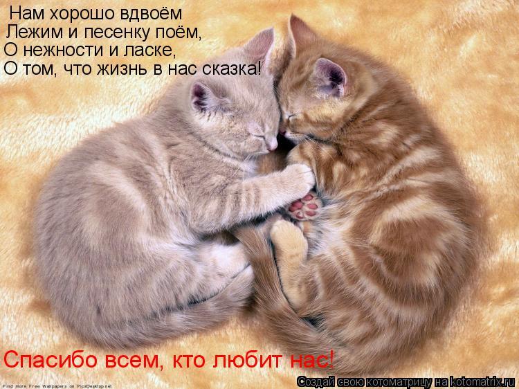 Котоматрица: Нам хорошо вдвоём Лежим и песенку поём, О нежности и ласке, О том, что жизнь в нас сказка! Спасибо всем, кто любит нас!