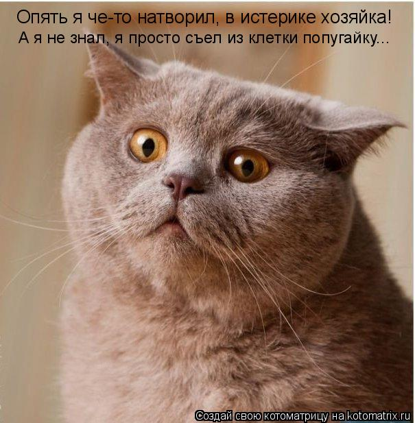Котоматрица: Опять я че-то натворил, в истерике хозяйка! А я не знал, я просто съел из клетки попугайку...