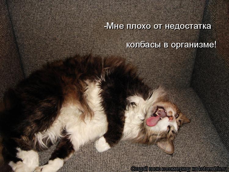 Котоматрица: -Мне плохо от недостатка  колбасы в организме!